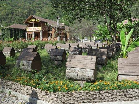 Пчелиная пасека на кубани