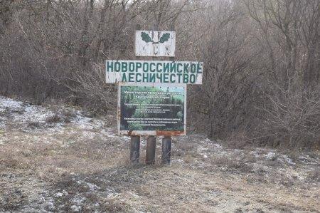 Новороссийское лесничество