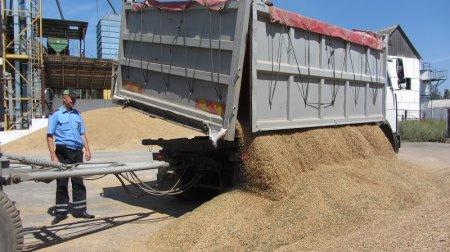 Разгрузка зерна на зернохранилище Кубани